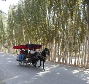 馬車タクシー(カシュガル郊外)